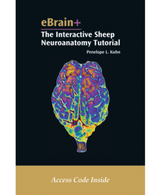 eBrain+: The Interactive Sheep Neuroanatomy Tutorial