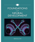 Foundations of Neural Development