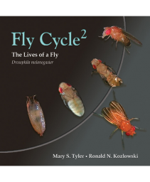 Fly Cycle 2